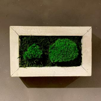 Moosbild, klein mit Vintage-Rahmen