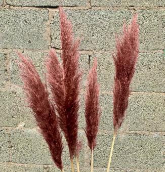 Pampas Gras in Kupfer. Stückpreis 4,90 €.